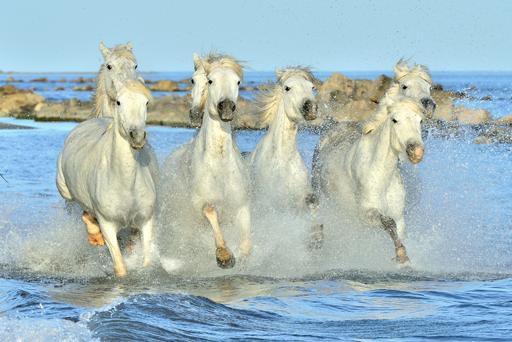 Animed Pro Equo:  Neues aus der Pferdewelt
